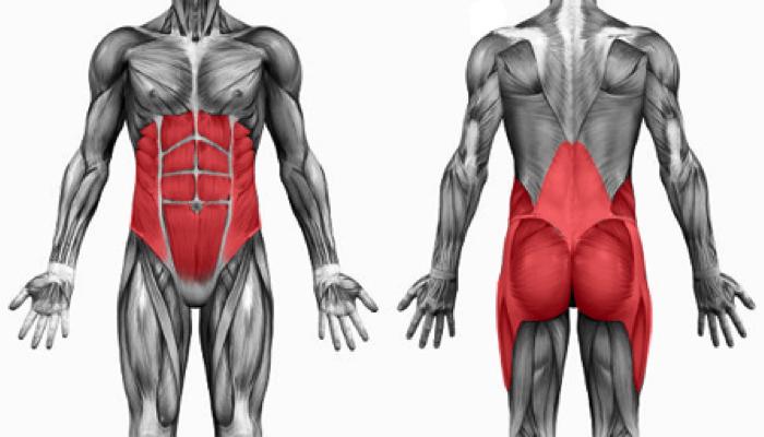 Особенности тренинга мышц кора.